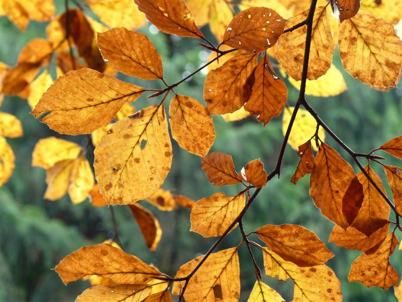 efterårsblade efteråret