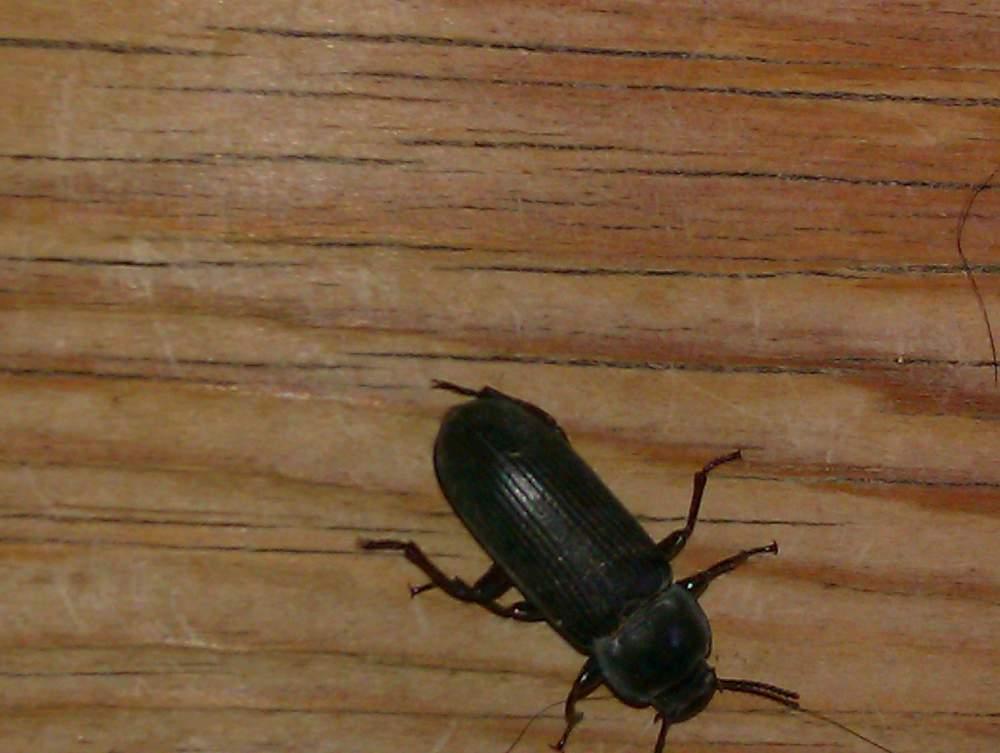 sorte biller i huset