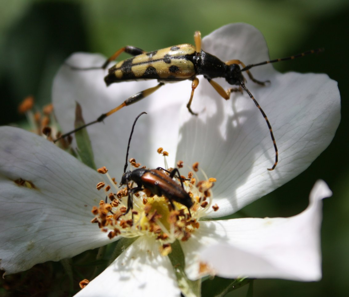 Kommentar postet d. 28-06-12 kl. 18:43. emne: to insekter fra skoven