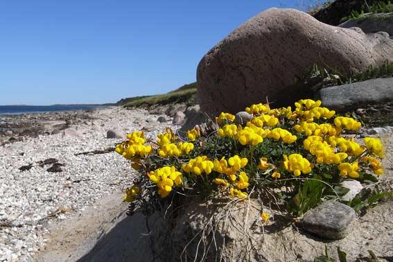 Fotokonkurrence 4. - 11. juni: Blomst(er) & farven gul - Side 1 ...