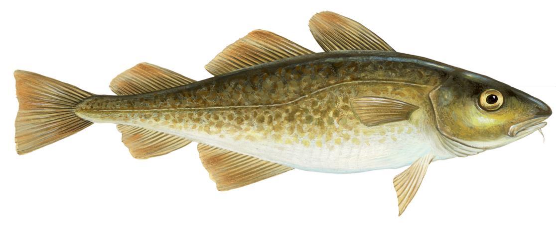 Ny dnametode sporer fisk og hvaler i havvand - Side 1 ...