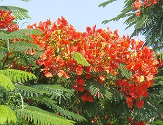 Steen erik holm smukt træ på cypern - hvilket? (læst 2331 gange