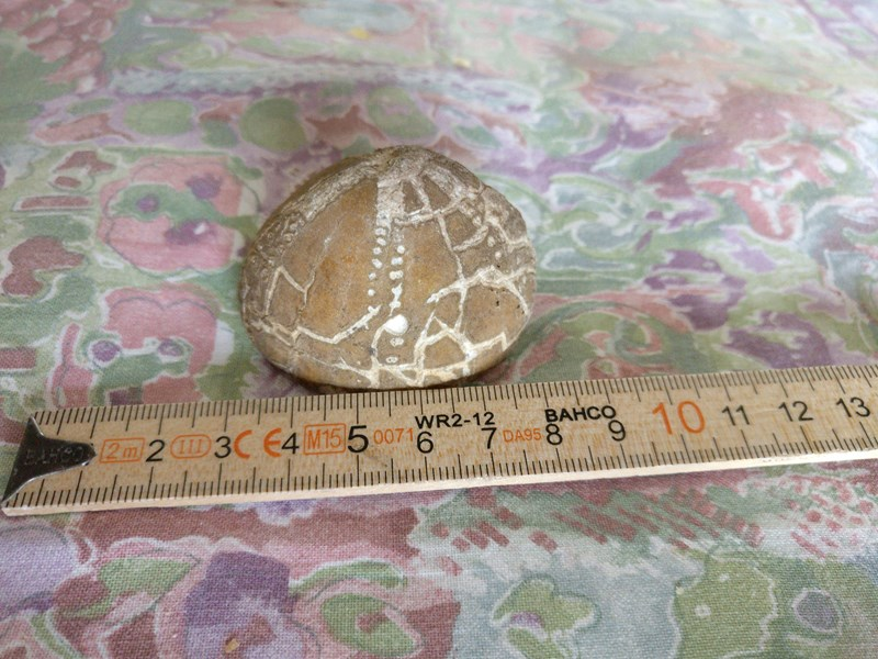 Er dette en forstenet skildpadde eller bare en sten? - Side 1 - Forum - Sten og fossiler ...
