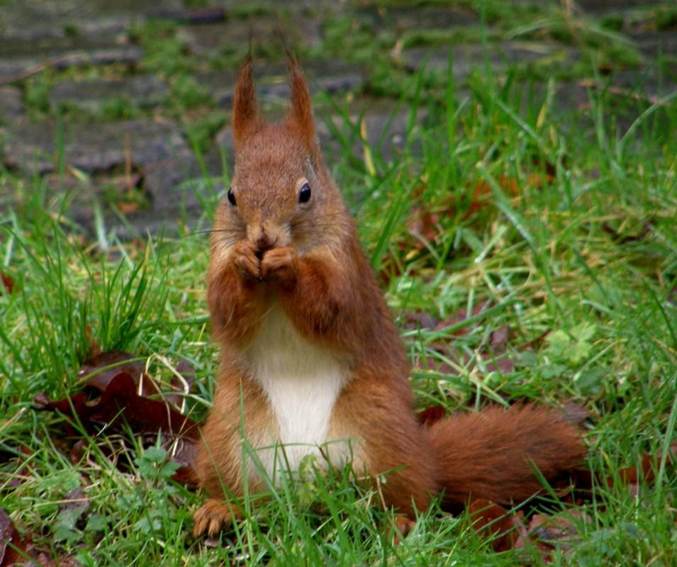 hvor bor egern