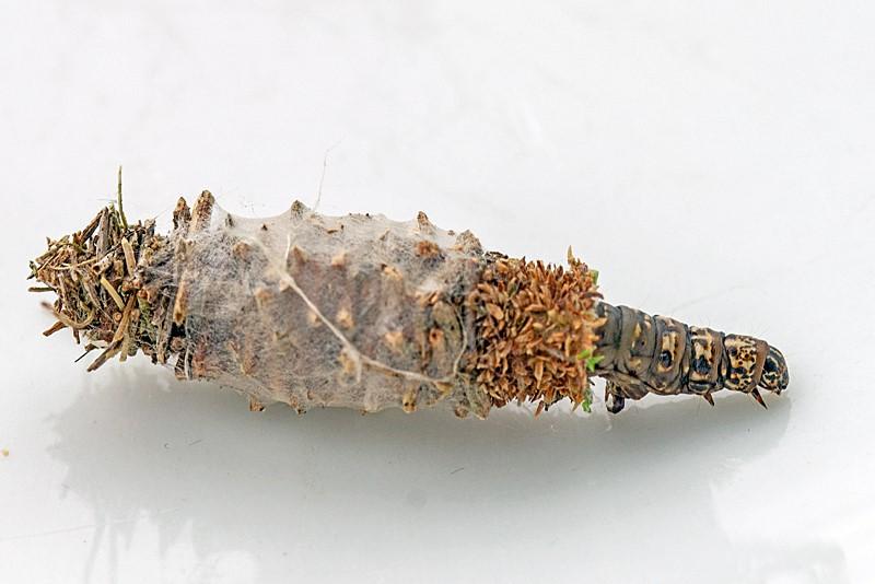 Tværsat Græsstråsæk