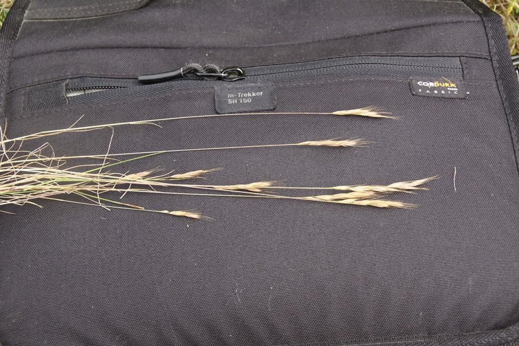 Langstakket Væselhale (Vulpia bromoides)