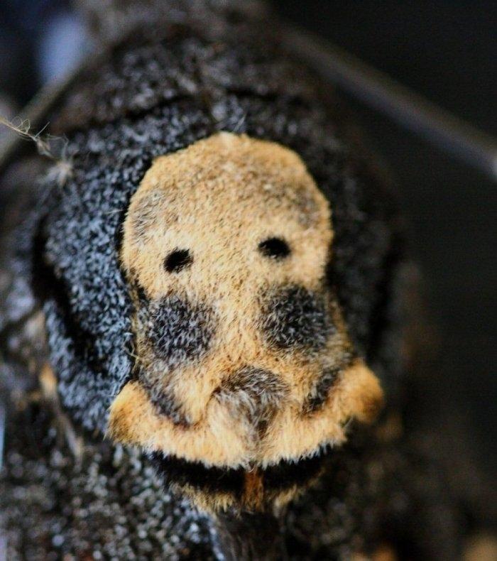 Foto/billede af Dødningehoved (Acherontia atropos)