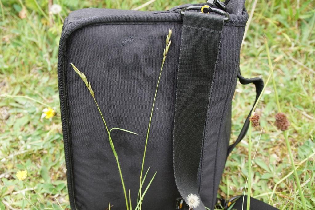 Tandbælg (Danthonia decumbens)