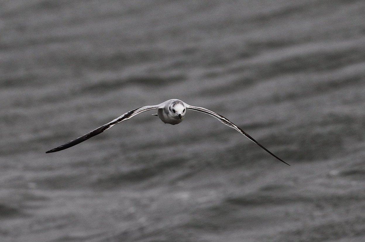 Fotograf:  Peter Nielsen
