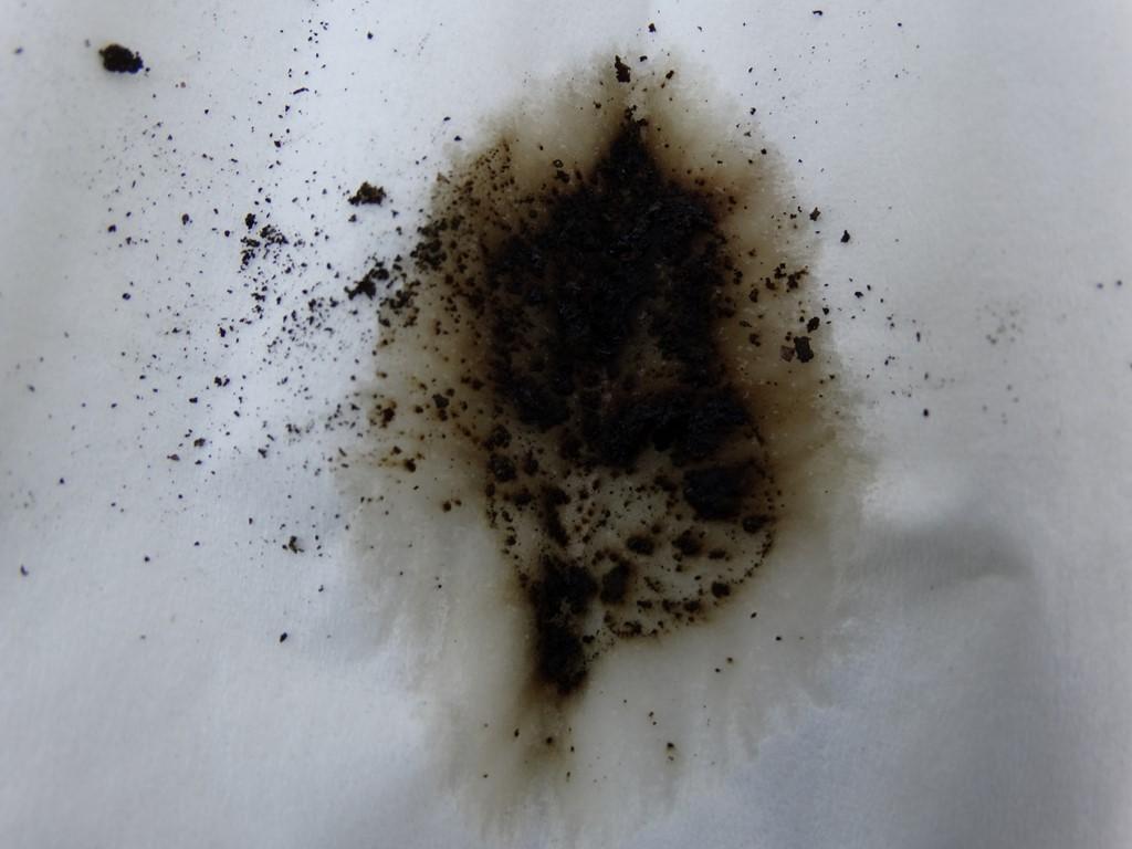 Foto/billede af Skorpe-Kulbær (Hypoxylon macrocarpum)