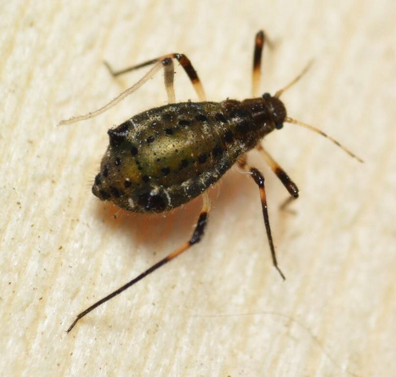 hallo wer kennt dieses kleine tierchen k nnte es ein k fer sein tiere garten. Black Bedroom Furniture Sets. Home Design Ideas