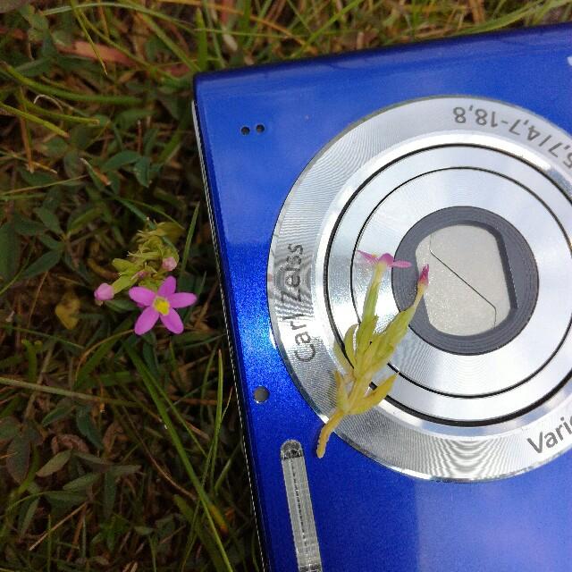 Foto/billede af Liden tusindgylden (Centaurium pulchellum)