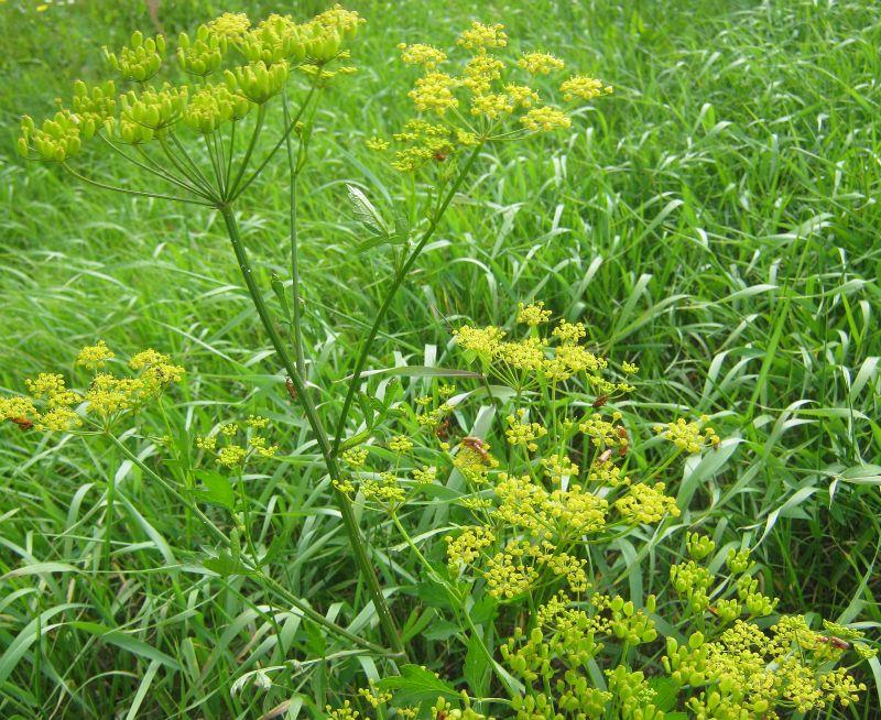 Børn plukkede tige planter : &;en tur i skoven endte med vabler og