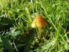 Foto/billede af Agaricomycetes - Agaricomycetes