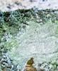 Almindelig Støvlav (Lepraria incana)