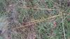 Foto/billede af Blomstersivfamilien - Scheuchzeriaceae