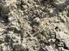 Spæd Markarve (Arenaria leptoclados)