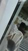 Snehare (Acronicta leporina)