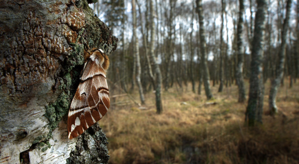 Fotograf: Lars Andersen